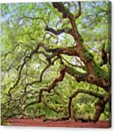 Ancient Angel Oak Tree  Canvas Print