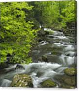Ancient Cascades In Great Smoky Mountains Canvas Print