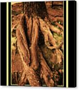 Ancient Roots Of Greece Canvas Print