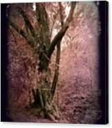 Ancient Tree By A Stream Canvas Print