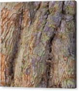 Ancient Tree Skin Canvas Print