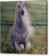 Andalusian Spirit Canvas Print