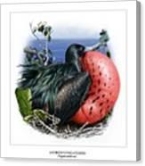 Andrews Frigatebird Fregata Andrewsi 3 Canvas Print