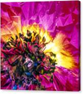 Anemone Abstracted In Fuchsia Canvas Print