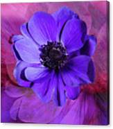 Anemone In Purple Canvas Print