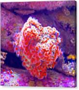 Anemones In Monterey Aquarium-california   Canvas Print