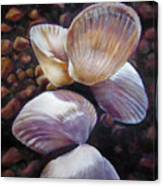 Ane's Shells Canvas Print