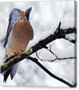 Angel Mourning Dove Canvas Print