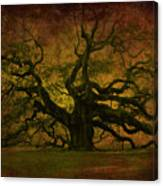 Angel Oak 3 Charleston Canvas Print