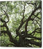 Angel Oak Branches Canvas Print