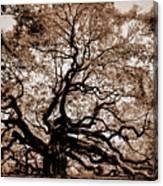 Angel Oak Johns Island Sc Canvas Print