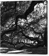 Angel Oak Limbs Bw Canvas Print