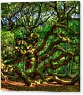 Angel Oak Morning Shadows Charleston South Carolina Canvas Print