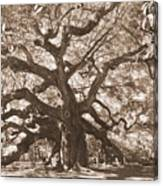 Angel Oak Sepia Canvas Print