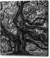 Angel Oak Tree Americana Canvas Print