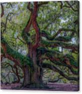 Angel Oak Tree Deeply Rooted History Canvas Print