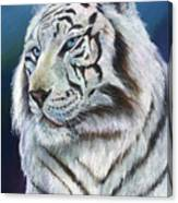 Angel The White Tiger Canvas Print