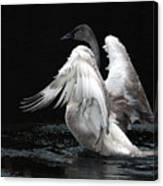 Angel Wings 2 Canvas Print