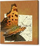 Anglewing Butterfly Canvas Print