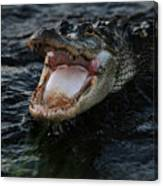 Angry Gator Canvas Print