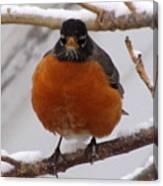 Angry Robin Canvas Print