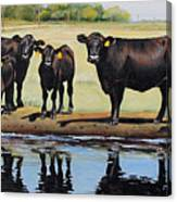 Angus Reflections Canvas Print