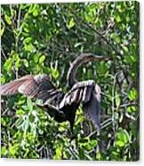 Anhinga In The Sun Canvas Print