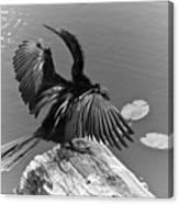 Anhinga On Lake Canvas Print