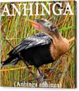 Anhinga The Swimming Bird Canvas Print