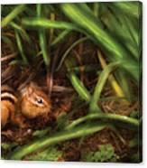 Animal - Wild - Cute Little Chipmunk  Canvas Print