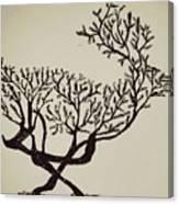 Animal Drawing Canvas Print