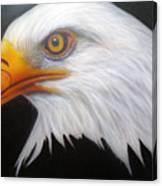 Animal- Eagle Canvas Print