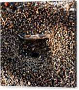 Animal Homes Ants Maybe Canvas Print