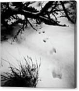 Animal Tracks Canvas Print