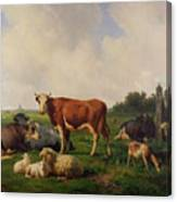 Animals Grazing In A Meadow  Canvas Print