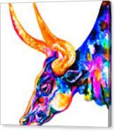 Ankole Longhorn Canvas Print