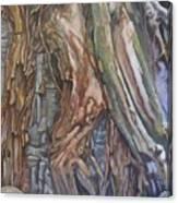 Ankor Temple Trees  Canvas Print