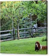 Annie In Her Yard Canvas Print