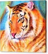 Ano Do Tigre Canvas Print