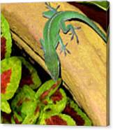 Anole Having A Drink Canvas Print