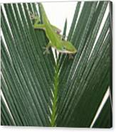 Anole With Palm - Assertive Canvas Print
