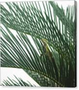 Anole With Palm - Entangled Canvas Print