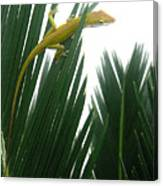 Anole With Palm - Flexible Canvas Print