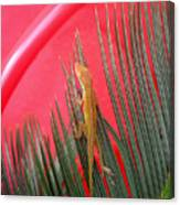 Anole With Palm - In The Red Canvas Print