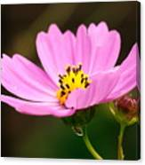 Another Cosmos Canvas Print