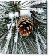 Another Frosty Pine Cone Canvas Print