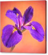Another Iris Canvas Print