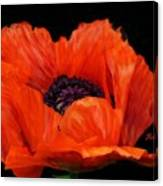 Another Red Poppy Canvas Print