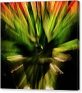 Another Tulip Explosion Canvas Print