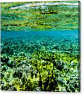 Ant Atoll Reef Canvas Print